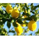 Sidrun. Lemon eeterlik õli 30 ml