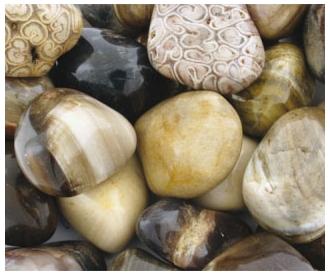 Kivistunud puit lihvitud