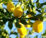 Sidrun. Lemon eeterlik õli 10 ml