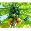 Papaia. Papaya eeterlik õli