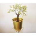 Peridoot bonsai küllusepuu orgon alusel